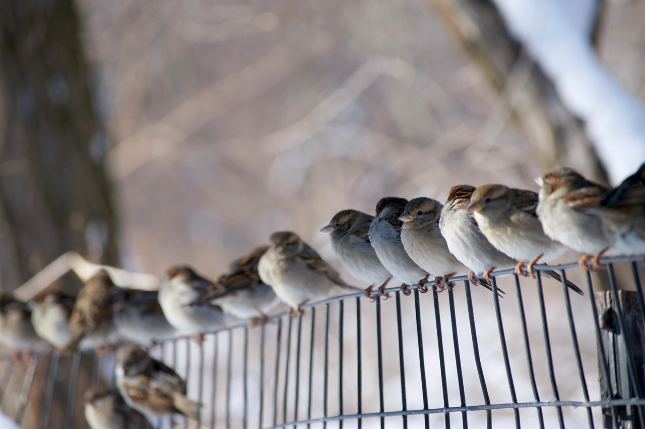 Sparrows of the Dawn