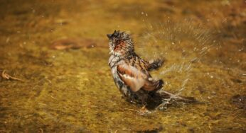 Sparrows in Monsoon: Studying the Sleep & Roosting Pattern of Sparrows