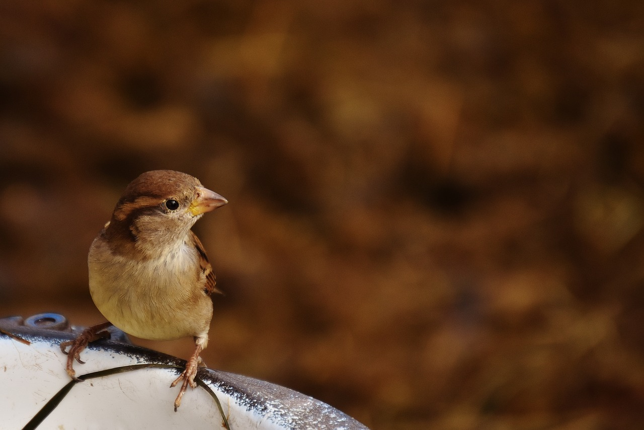 Little House Sparrow Returned Today: Sparrow who loves Roosting on Tube light