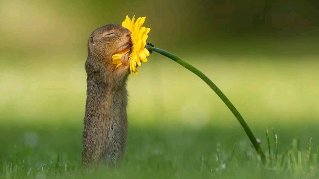 Have you seen a Squirrel smelling Flowers? This Photographer has made it Happen
