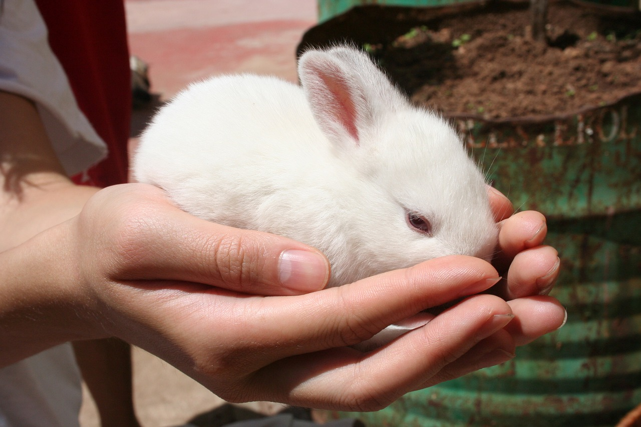 12 Reasons why Rabbits are the Cutest Badass Pets + Tales of my Pet Rabbits